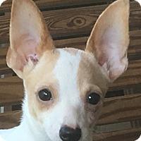 Adopt A Pet :: Yota - Spring Valley, NY