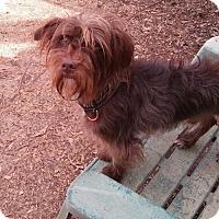 Adopt A Pet :: Turbo - Loganville, GA