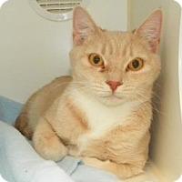 Adopt A Pet :: Diamond - Lowell, MA