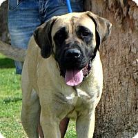 Adopt A Pet :: London - Goodyear, AZ