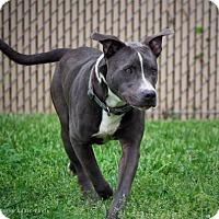 Adopt A Pet :: Jackson - Lincolnton, NC