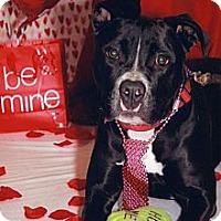 Adopt A Pet :: Ellis - HOUSETRAINED & SWEET - Burbank, CA