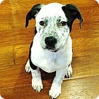 Adopt A Pet :: DIAMOND - Torrance, CA