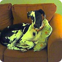 Adopt A Pet :: Libby - Providence, RI