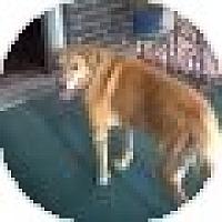 Adopt A Pet :: Spanky - Denver, CO