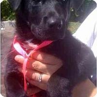 Adopt A Pet :: Zack - Fowler, CA