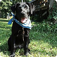 Adopt A Pet :: BO - Essex Junction, VT