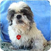 Adopt A Pet :: Silias - Phoenix, AZ