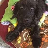Adopt A Pet :: Tompkins - Oceanside, CA