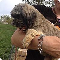 Adopt A Pet :: Minnie - Albert Lea, MN