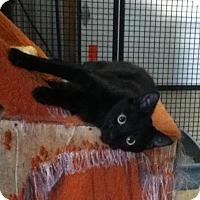 Adopt A Pet :: Jet - Hamilton, ON
