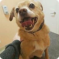 Adopt A Pet :: Tishy - Edmonton, AB