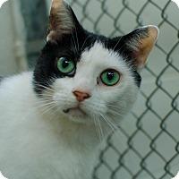 Adopt A Pet :: Kit Kat - Greenwood, SC
