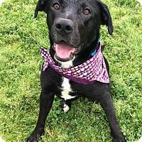 Adopt A Pet :: Frannie - Corning, CA