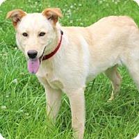 Adopt A Pet :: PUPPY EVIE - Washington, DC