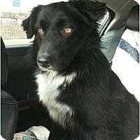Adopt A Pet :: BricePENDING - Toronto/Etobicoke/GTA, ON