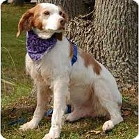 Adopt A Pet :: Clancy - Buffalo, NY