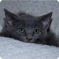 Adopt A Pet :: Cloud - New Egypt, NJ