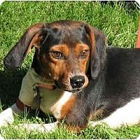 Adopt A Pet :: Mabel - Blairstown, NJ