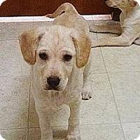 Adopt A Pet :: Sonny - Silsbee, TX