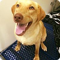 Adopt A Pet :: Nemo - Cumming, GA