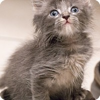 Adopt A Pet :: Wink - Chicago, IL