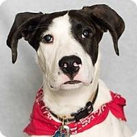 Adopt A Pet :: Neeko - Minneapolis, MN