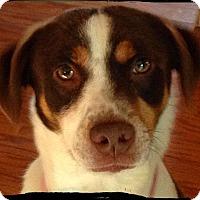 Adopt A Pet :: Carly - Bastrop, TX