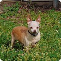 Adopt A Pet :: Preston - Lufkin, TX