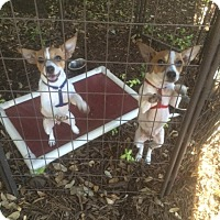 Adopt A Pet :: Tango - Fair Oaks Ranch, TX