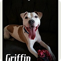 Adopt A Pet :: Griffin - Toledo, OH