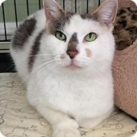 Adopt A Pet :: Vivian - Breinigsville, PA