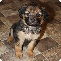 Adopt A Pet :: Lulu Rose - St. Charles, MO
