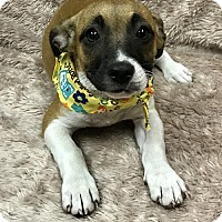 Adopt A Pet :: Camilla - Fort Pierce, FL