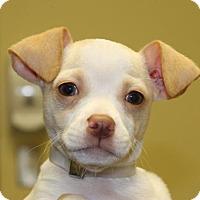 Adopt A Pet :: Prince - Potomac, MD