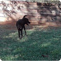Adopt A Pet :: Sara in OK - Oklahoma City, OK