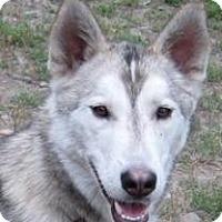 Adopt A Pet :: Rocket - Kettle Falls, WA