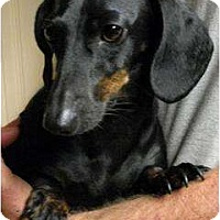Adopt A Pet :: Sadie - Harrison, AR
