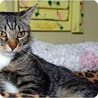 Adopt A Pet :: Abbey Road - Alexandria, VA