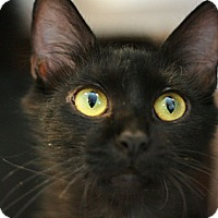 Adopt A Pet :: Nita - Canoga Park, CA