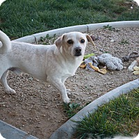 Adopt A Pet :: Jamie - California City, CA