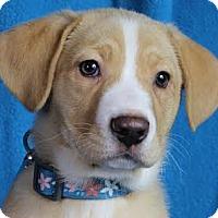 Adopt A Pet :: Tessie - Minneapolis, MN