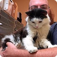 Adopt A Pet :: India - McDonough, GA