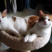 Adopt A Pet :: Henri - Santa Ana, CA