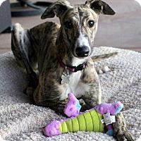 Adopt A Pet :: Lilly - Tucson, AZ