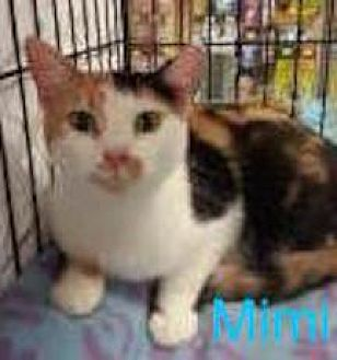 Calico Cat for adoption in Satellite Beach, Florida - Mimi