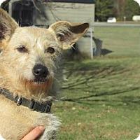 Adopt A Pet :: Reena - Rocky Mount, NC