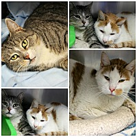 Adopt A Pet :: Snowball & Lifefoot - Forked River, NJ