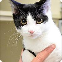Adopt A Pet :: Regina - Midland, TX