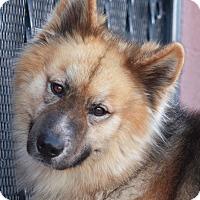Adopt A Pet :: Teddy von Tessin - Los Angeles, CA